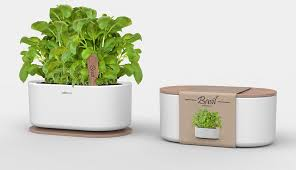 indoor herb garden kits to grow herbs indoors hgtv garden kits indoor herb garden kits to grow herbs indoors hgtv