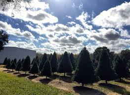 4 christmas tree farms to visit this holiday season houstonia