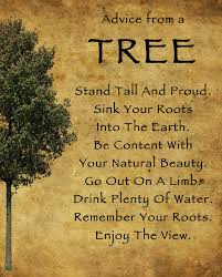 quotes about beauty of fall quotes about beautiful trees 90 quotes