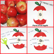 parts of an apple learning craft for kids wikki stix