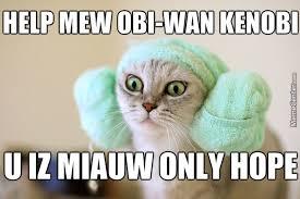 Memes Cat - haha more cat memes by k i a meme center