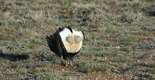 Colorado wildlife images Wildlife council jpg