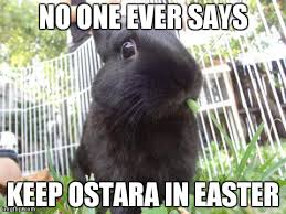 Pagan Easter Meme - pagan bunny problems imgflip