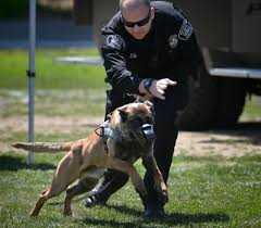 belgian malinois police behind the badge orange county grip three day soccer camp helps