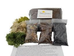 Succulent Kits by Amazon Com Terrarium Diy Succulent Cactus Kit Small With