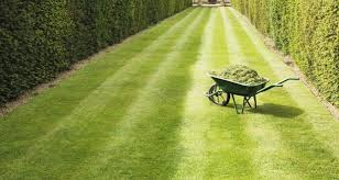 start now to ensure velvet smooth lawn this summer