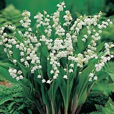 of the valley flower of the valley flower power fundraising