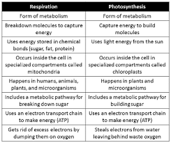 Photosynthesis And Cellular Respiration Worksheet Comparing Contrasting Cellular Respiration Photosynthesis