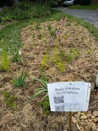 native plants for rain gardens going native my journey from traditional to native plant