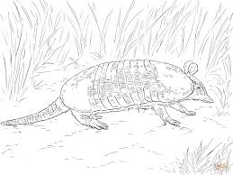 realistic giant armadillo coloring page free printable coloring