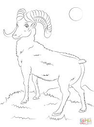 mountain bighorn sheep coloring page free printable coloring pages
