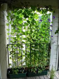 Garden Privacy Ideas Need Privacy Diy Garden Privacy Ideas The Garden Glove