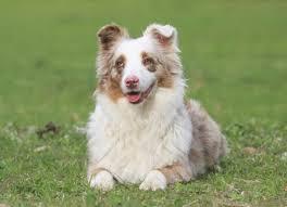 loss of dog dog hearing loss hearling loss symptoms in dogs petmd