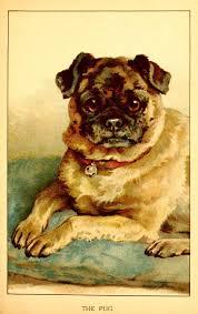 bichon frise z hter hessen vintage pug puppy wuppie pinterest vintage dog and vintage dog