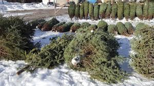 bulletin 7009 christmas tree marketing cooperative extension