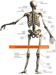 Pictures Of The Anatomy Of The Human Body Inside India U0027s Underground Trade In Human Remains Wired