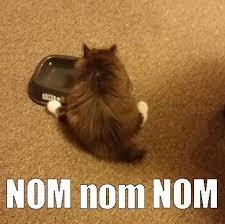 Nom Nom Nom Meme - cutest muncher ever shared by yanito freminoshi