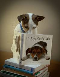 22 puppies that love reading learning dog and russell terrier