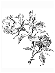 how to draw coloring pages coloring pages roses