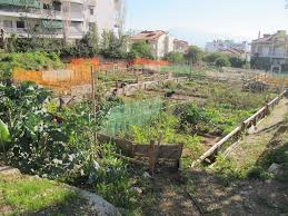 urban gardening in athens u2014 the reallifeproject
