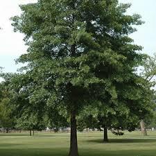 6 trees plant nj pa organic plant care llc nj