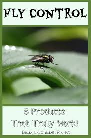 How To Get Rid Of Backyard Flies by Get Rid Of Flies 8 Products That Really Work