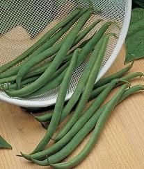 151 best burpee seeds images on pinterest vegetable garden