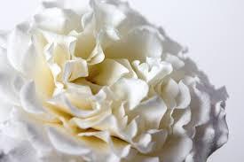 bouquet de fleurs roses blanches images gratuites fleur blanc la photographie pétale
