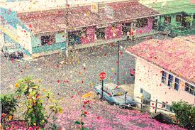 volcano flowers 8 million flowers cover costa for sony ad yellowtrace