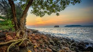 rocky shore wallpapers wonderful tree on rocky shore in goa india hdr beaches u0026 nature