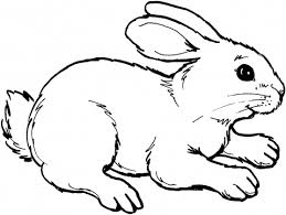 Rabbit Coloring Pages Rabbit Color Page Free Printable For Kids Rabbit Colouring Page