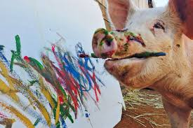 meet u0027pigcasso u0027 the painting hog at the center of the art world