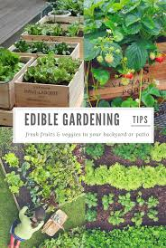 edible backyard garden champsbahrain com