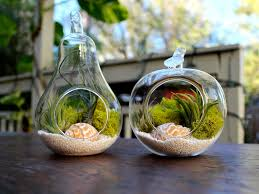 10 beautiful plant terrariums home designing