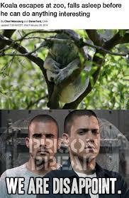 Prison Break Memes - prison break memes best collection of funny prison break pictures
