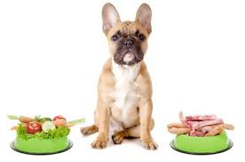 raw dog food should i feed my dog a raw diet