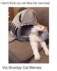 New Grumpy Cat Meme - 25 best memes about grumpy cat memes grumpy cat memes