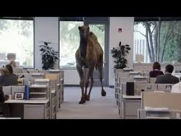 Hump Day Camel Meme - hump day camel uh oh guess what day it is hump day camel youtube