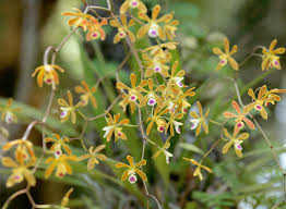 non native plants in florida the florida native orchid blog