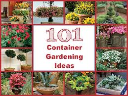 Container Gardening Ideas 101 Container Gardening Ideas Gardening Pinterest Container