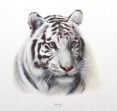 charles frace print white tiger