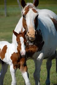 144 Best Momma Horse And Baby Images On Pinterest Beautiful