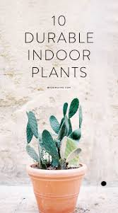 10 pretty indoor plants you can u0027t kill plants gardens and black