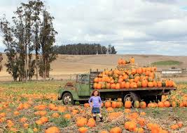 Local Pumpkin Patches Marin And Sonoma Pumpkin Patches 2017 Marin Mommies