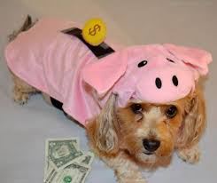Halloween Costumes Yorkies Piggy Bank Yourdesignerdog