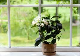 Plants For The Bedroom by 11 Plants For Your Bedroom To Help You Sleep Better