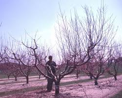 Best Fruit Trees For North Carolina - 15 tree fruit and nuts nc state extension publications