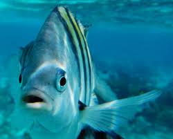 free images sea water ocean animal underwater fishing