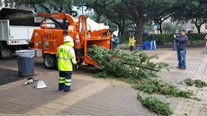 make your christmas tree last past holidays u2026 like houston