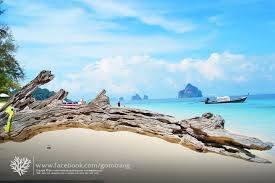 traveling agency images We are a professional local trang travel agency we provide many jpg